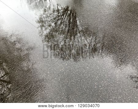 Puddle Next To A Sidewalk Reflects A Trees