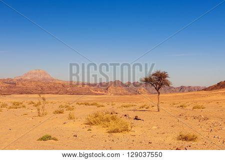 dry desert and tree sinai peninsula egypt