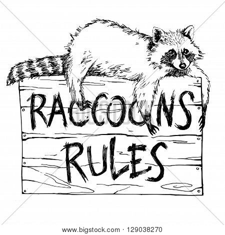 Funny and touching raccoon lies on a plate raccoons rules hand drawn engrave sketch vector illustration. Keep calm and love a raccoon