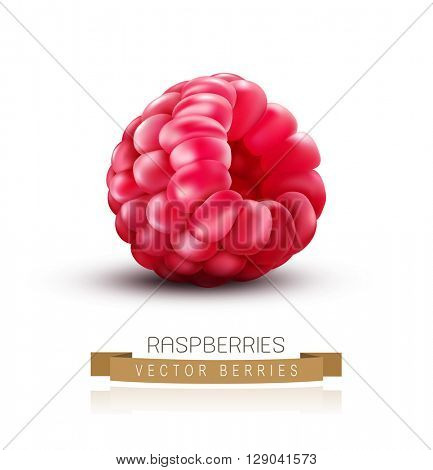 vector isolated raspberries on a white background