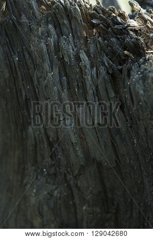 Burnt Wood Texture. Dark Abstract Wooden Background. A Tree Stump in the Forest