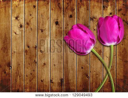 Purple tulips flower on wooden board. Mothers day.