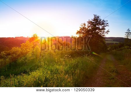 Rural landscape with a hill and a single tree at sunrise with warm light, trails in the meadow leading to the golden sun.