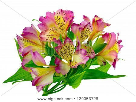 ( Alstroemeria) . Bunch pink alstroemeria flowers isolated on white backgroundwithout a shadow.