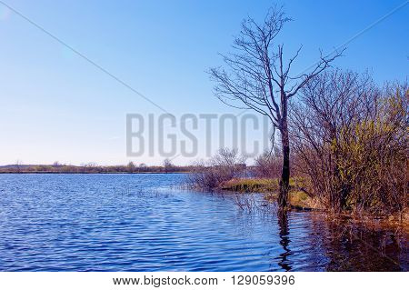 freshet. spring high water. river flooded the trees on the shore. copy space for your text