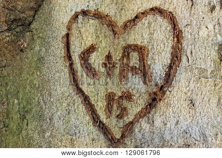 A heart and initials carved into the bark on a large tree.