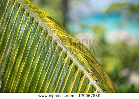 Fragment of closeup view of green palm leaf against blurred abstract tranquil ocean and beach background