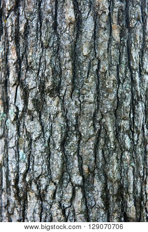 Close up shot of a tree bark background