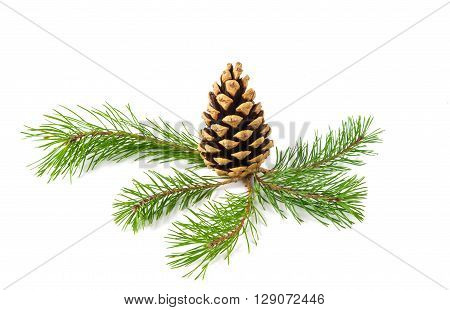 pine branch on a white background  seeds, green,