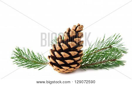 pine branch on a white background green, pine-tree,
