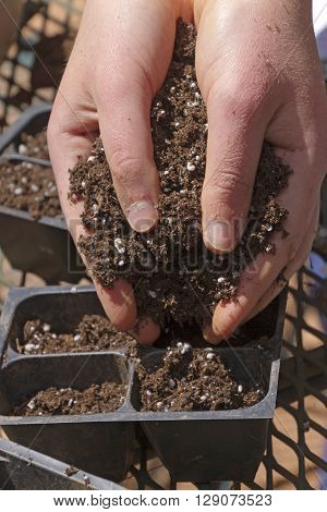 Close up of a young woman's hands filled with rich potting soil filling plastic seed pots with dirt for planting seeds on a sunny spring day