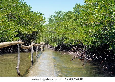 Mangrove forest on the coast. Philippines. Palawan.