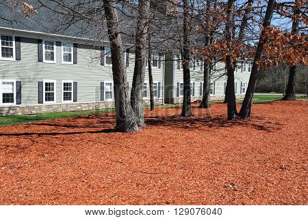 garden with new mulch landscaped outside apartment building