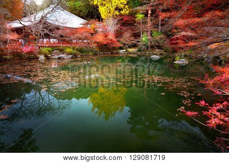 Autumn park in Daigoji Temple Kyoto Japan