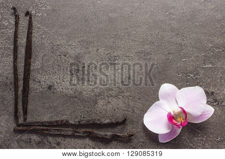 Colorful blooming orchid flower and fresh fragrant vanilla sticks pods on structure of concrete copy space for text