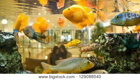 fish in an aquarium, photography, pimple, sea, silver, small,