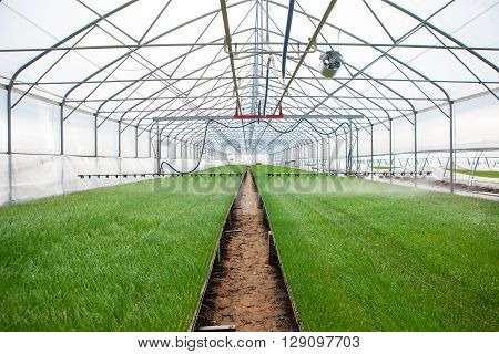 Greenhouse watering system in action Ecology World Environment Day CSR Seedling Go Green Eco Friendly Earth Health Care Food Garden New Life concept.