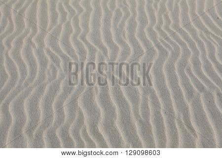 sand texture for background from Baltic sea.