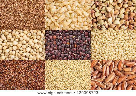 nine healthy, gluten free grains (black quinoa, two varieties of brown rice, millet, amaranth, teff, buckwheat, sorghum, kaniwa), a collage of top view life size macro images