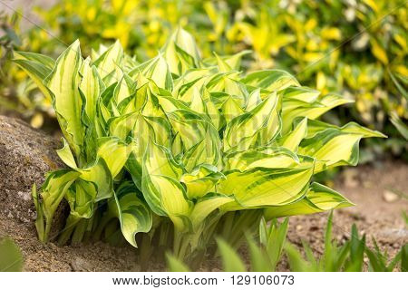Two Color Green Plant Leaf