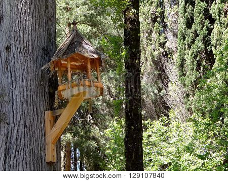 a bird feeder that is nailed to a tree in the Park of the city of Sochi
