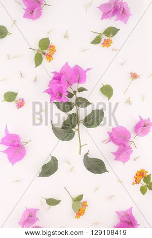 Flower background - fresh pink flowers on the white - top view