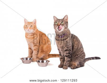 Two tabbies, brown and ginger, sitting next to their food bowls, waiting for dinner, with one licking her lips, on white