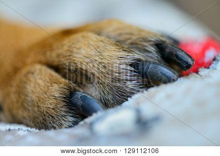 Pet Dog Paw