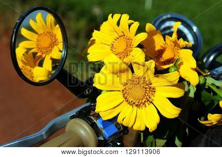 Close up of wild flower decor on motorbike in adventure tour by motorbike daisy flower or day quy is special floral of Dalat Vietnam