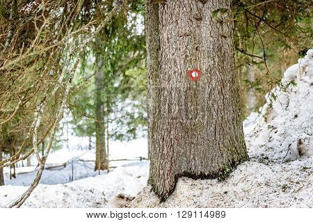 Mountain trail marker on a spruce tree in snow. Marked trail in woods in the winter.