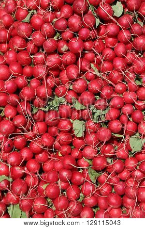A large mountain of red radishes on a market