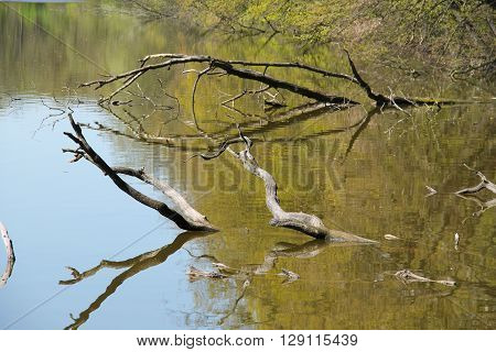 crooked branches of dead trees peeping out from the water