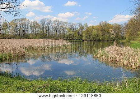 nice pond in Poodri, Czech Republic with trees on its banks and some reed on sunny spring day