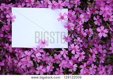 a white paper  with nice purple flowers