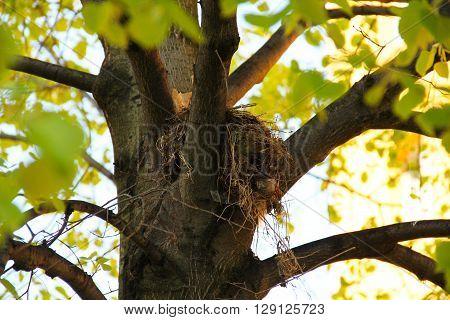 bird nest on the tree in spring