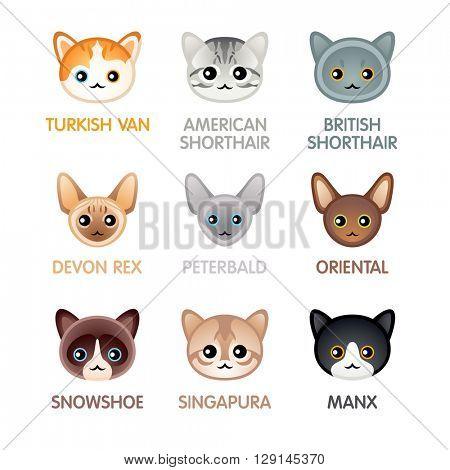 Kawaii cat breed head icons, set III