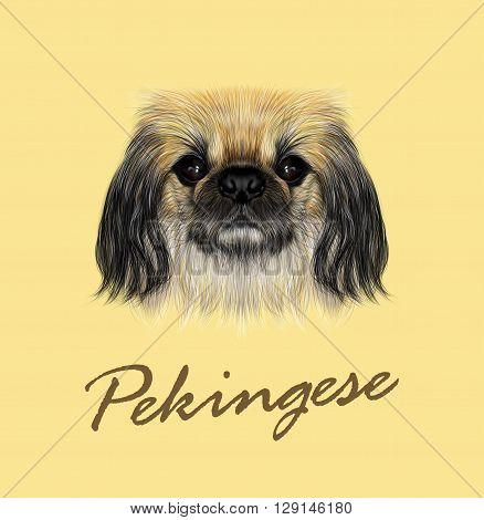Vector Illustrated portrait of Pekingese dog. Cute fluffy face of Pekingese dog on yellow background