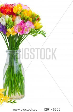 Fresh freesia flowers in glass  close up  isolated on white background