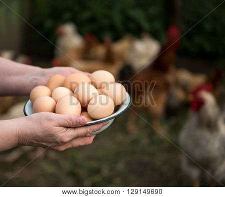 Woman farmer holding fresh organic eggs. Close up