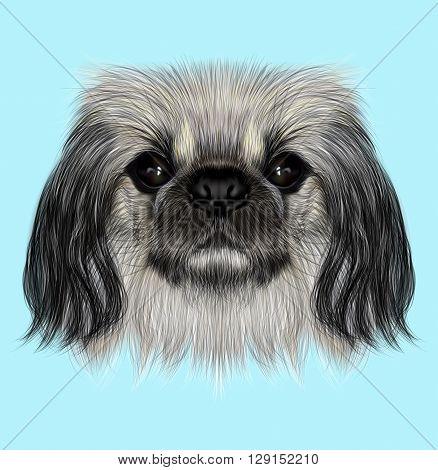 Illustrated portrait of Pekingese dog. Cute fluffy face of Pekingese dog on blue background