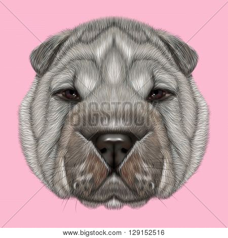 Illustrated Portrait of Shar Pei dog. Cute silver wrinkly face of domestic dog on pink background.