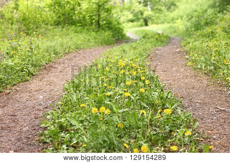 Summer road in forest with green grass and yellow flowers