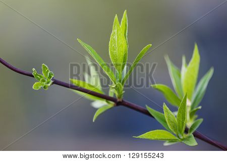 Spring time concept. Plant with green leaves. soft background. macro view