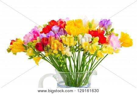 Bunch of Fresh multicolored  freesia flowers close up isolated on white background