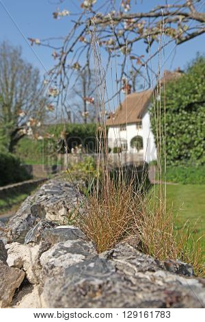 An old wall with grass tufts growing from the top with a thatched cottage just showing behind