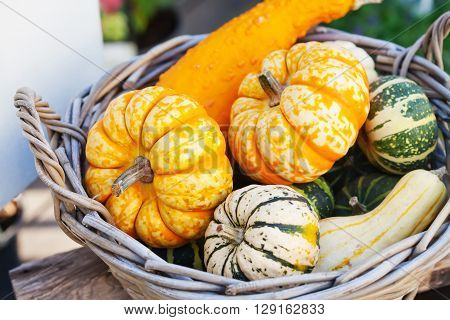 Food basket concept. Colorful halloween pumpkins in a wooden wicker. Autumn farmers harvest, thanksgiving day conceptual image. Soft focus.