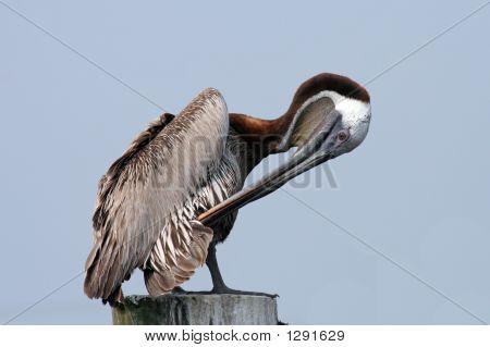Pruning Pelican