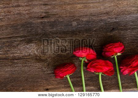 posy of red buds of ranunculus flowers on wooden nackground
