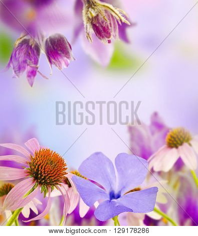 Beautiful flowers with meadow flower and blurred background