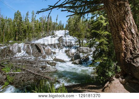 Crazy Creek Cascade in an area Beartooth Highway Wyoming USA